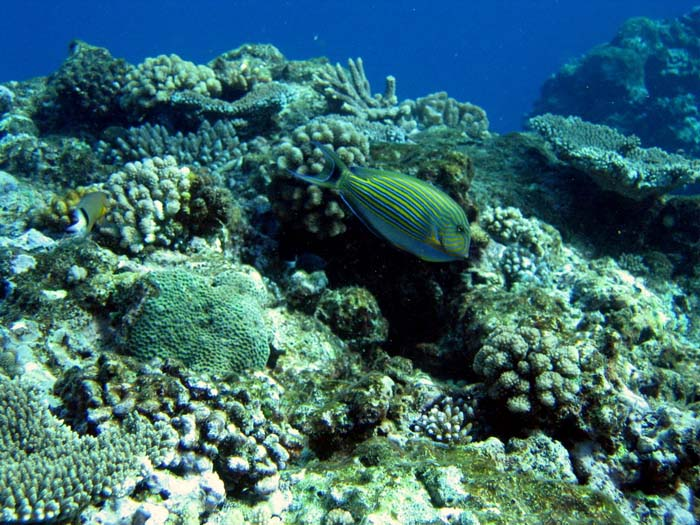 plongeennouvellecaldonie024.jpg