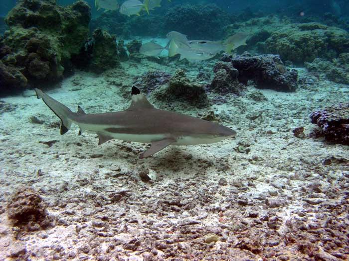 requin4.jpg